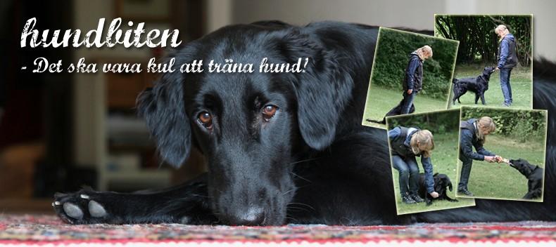 Hundbiten - en blogg om hundträning / klickerträning med Lina, Pejla & Zaphod